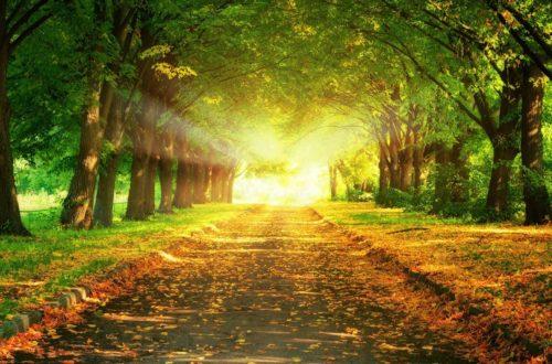 encontrar los caminos osvaldo santagada